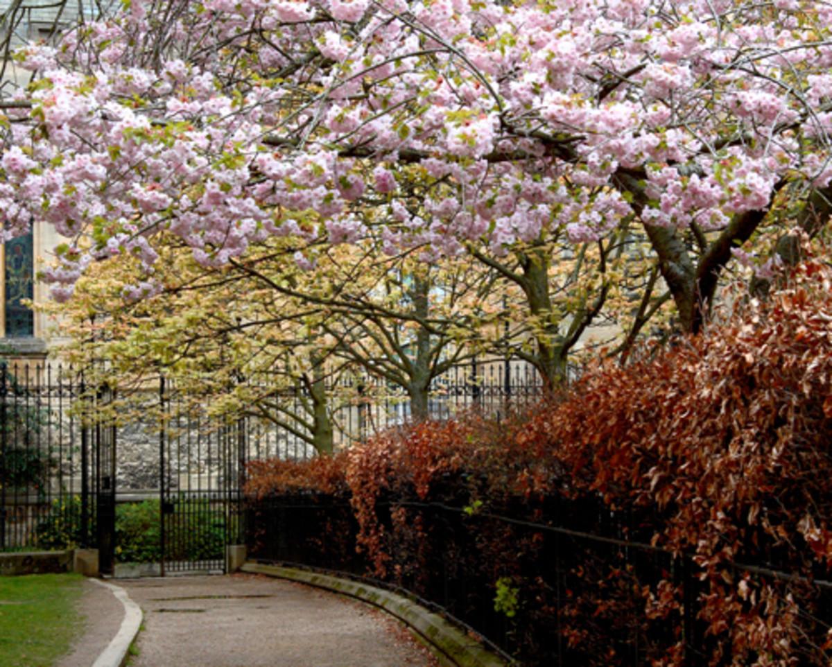 Path in Springtime