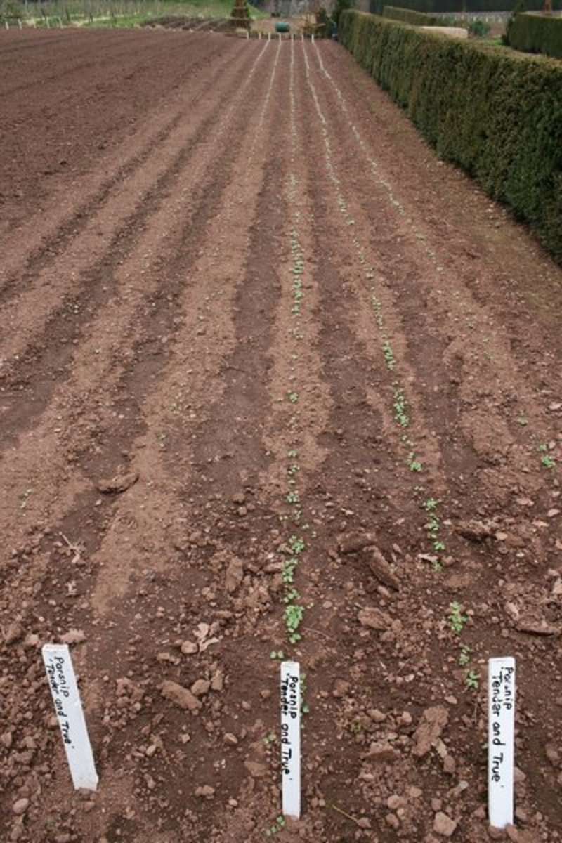 Planting a Spring Vegetable Garden
