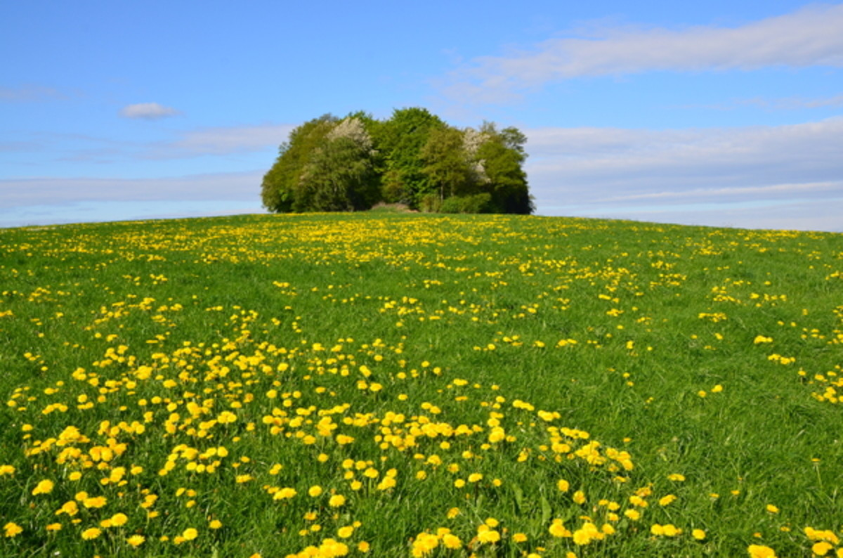 Spring on the Prairie Landscape