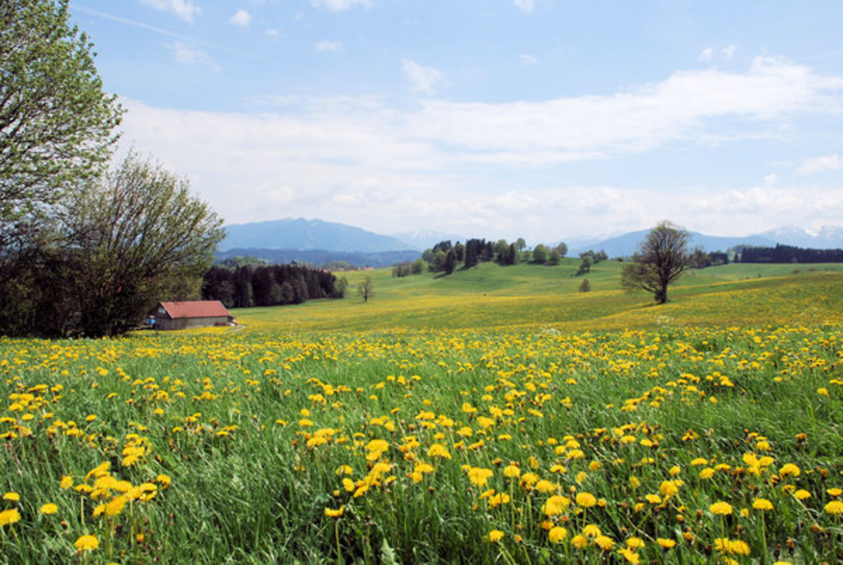 Spring in the Meadow Landscape Photo