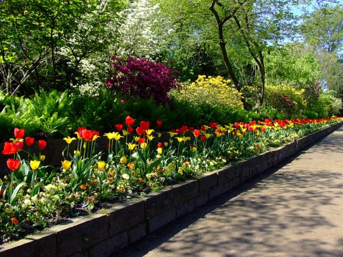 Spring Flower Beds in the Park