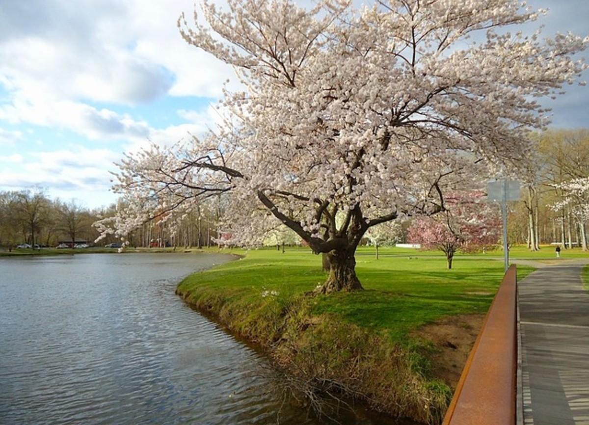 New Jersey Spring Landscape