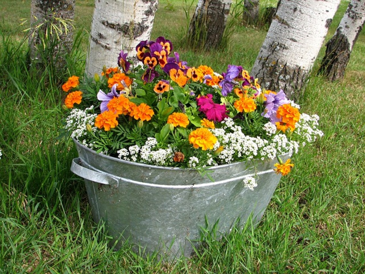Bucket of Spring Flowers