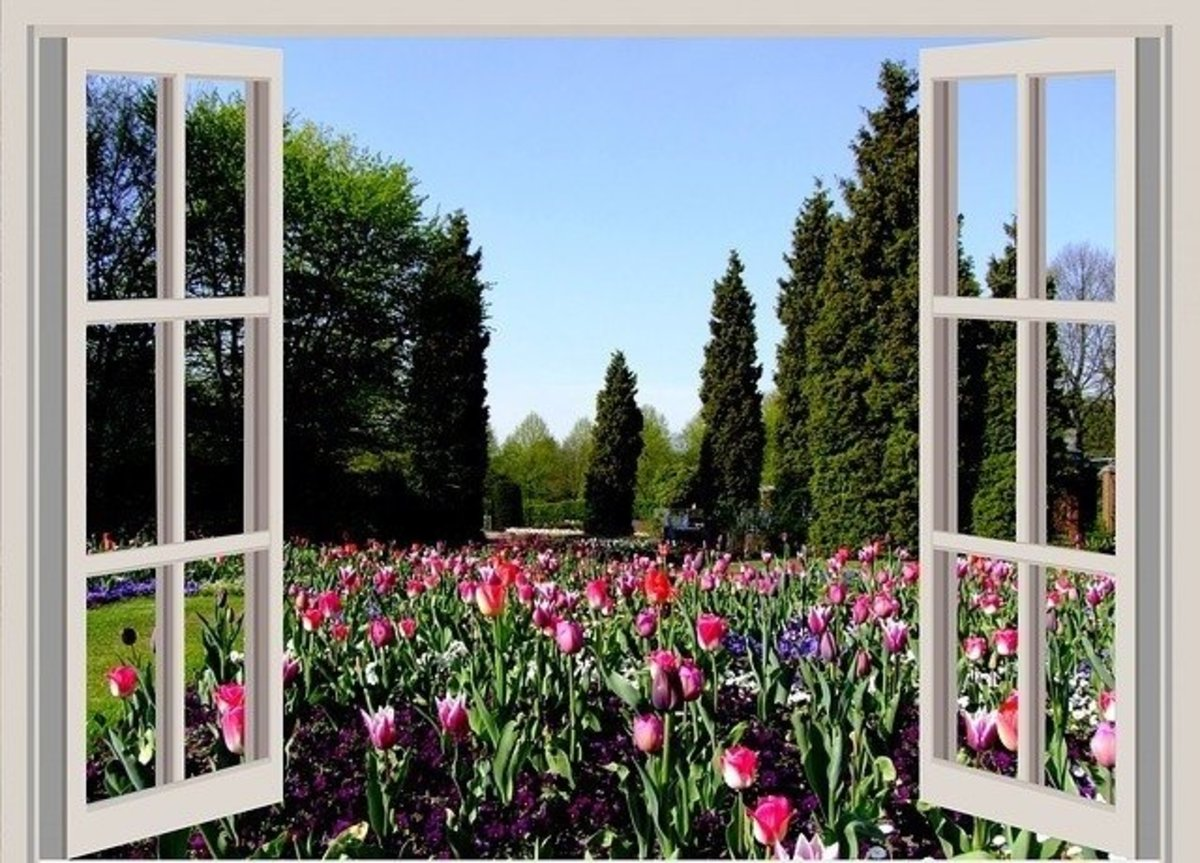 Open Window to Tulip Garden