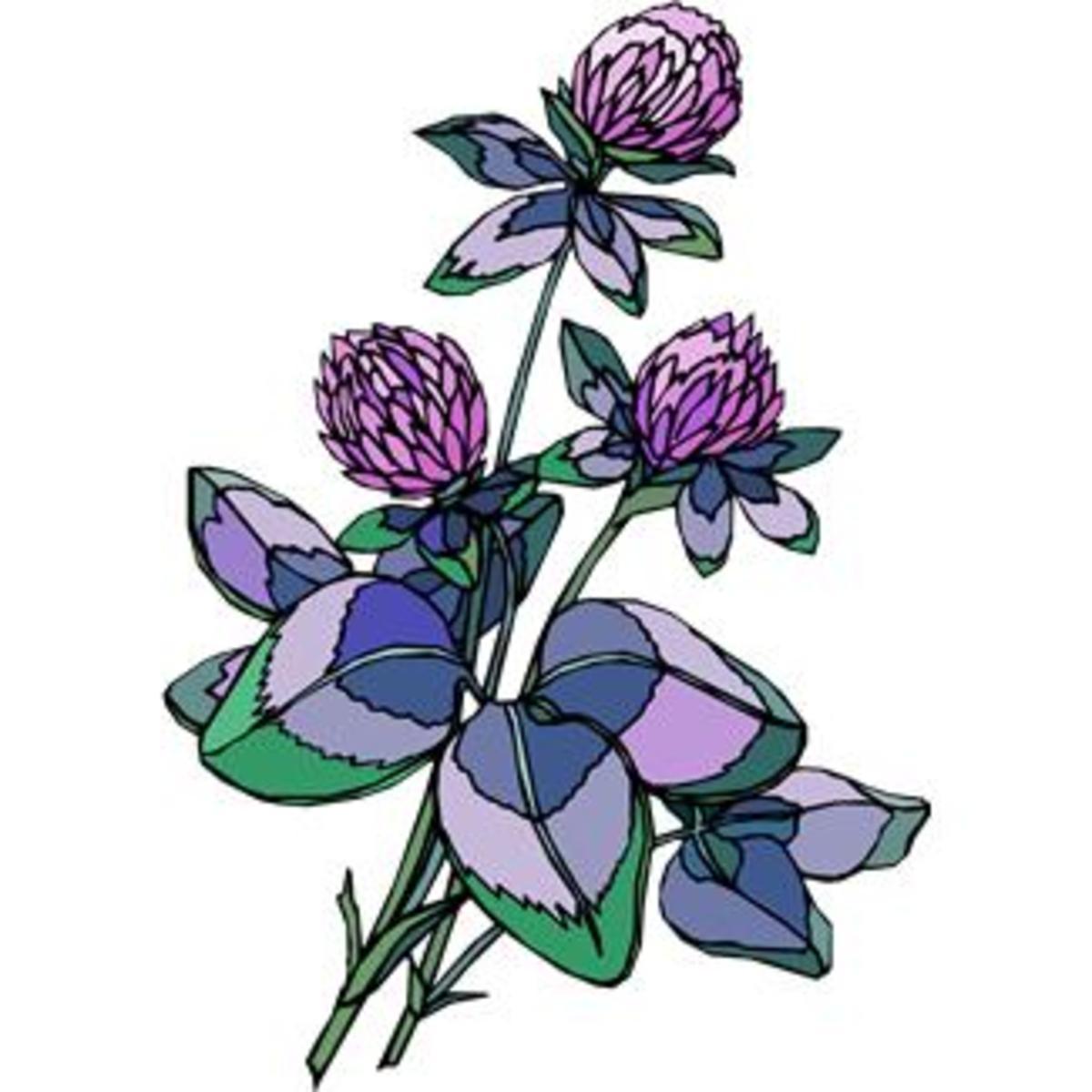 Clover Blooms