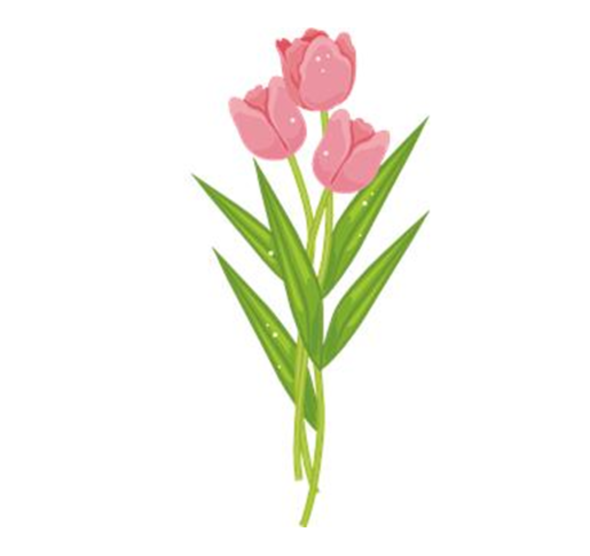 Three Pink Tulips with Dew Drops