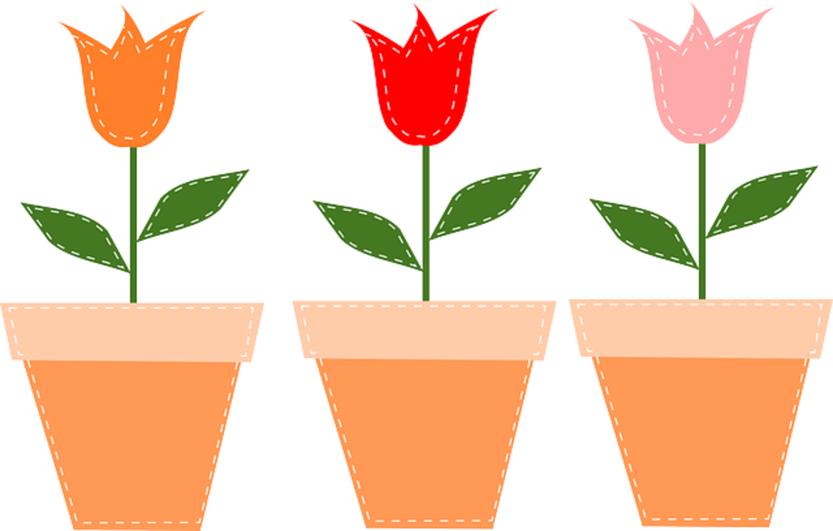 Three Tulips in Pots