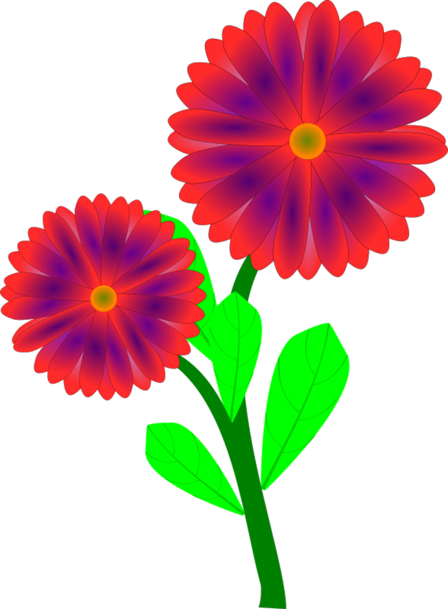Two Red Zinnias