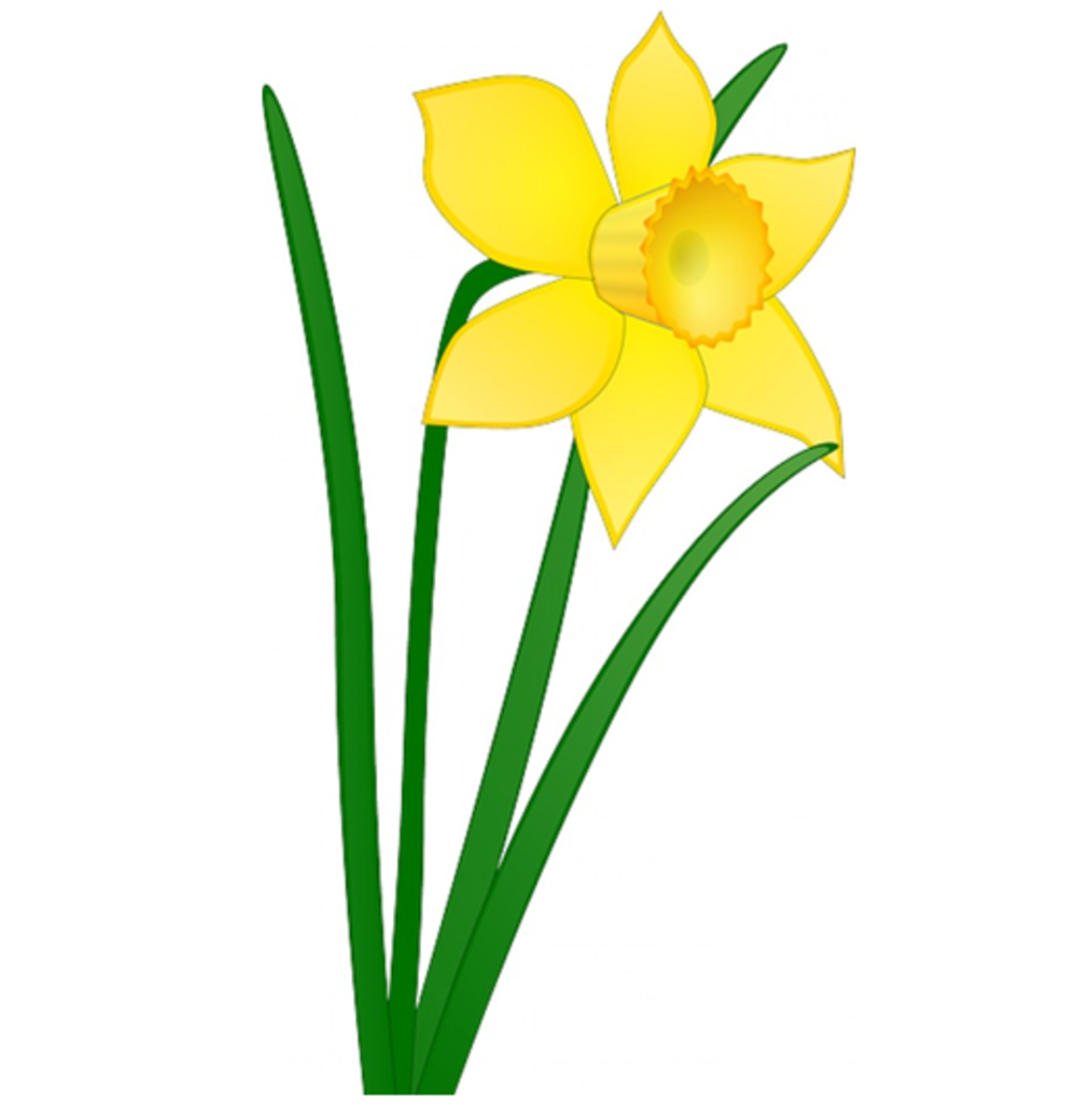 Big Yellow Daffodil