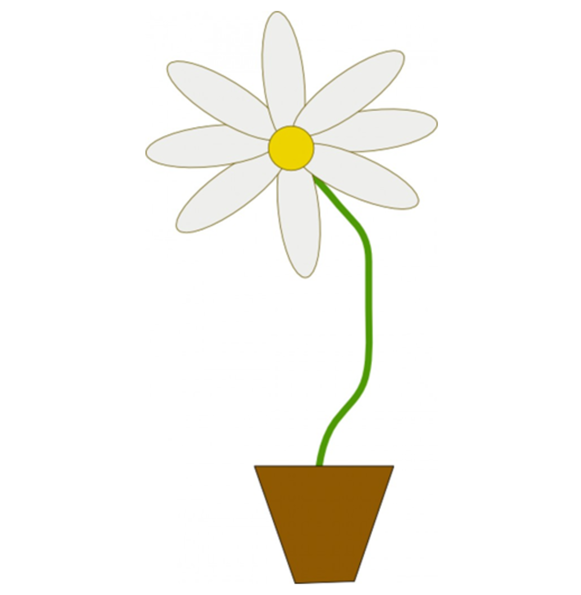White Flower in a Pot