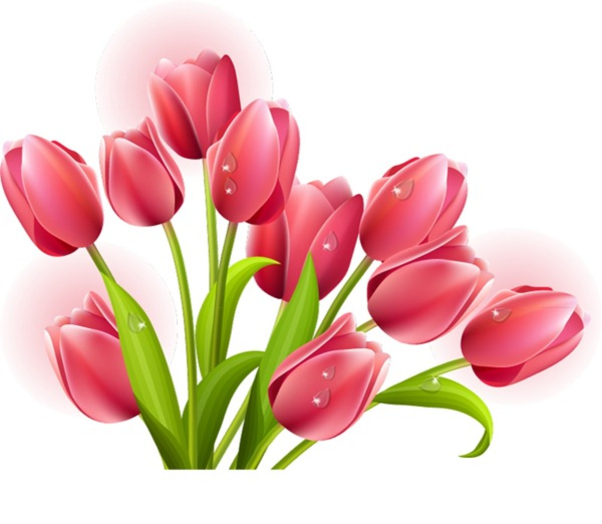 Cluster of Pink Tulips