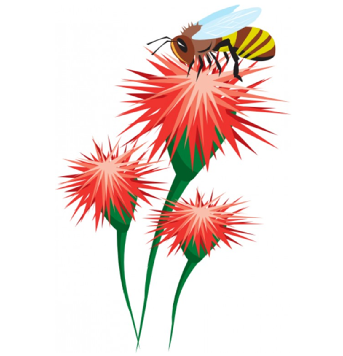 Three Red Thistle Flowers with a Bee
