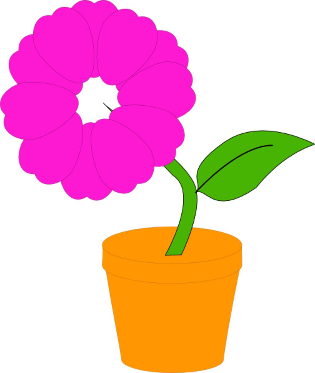 Pink Flower in Pot