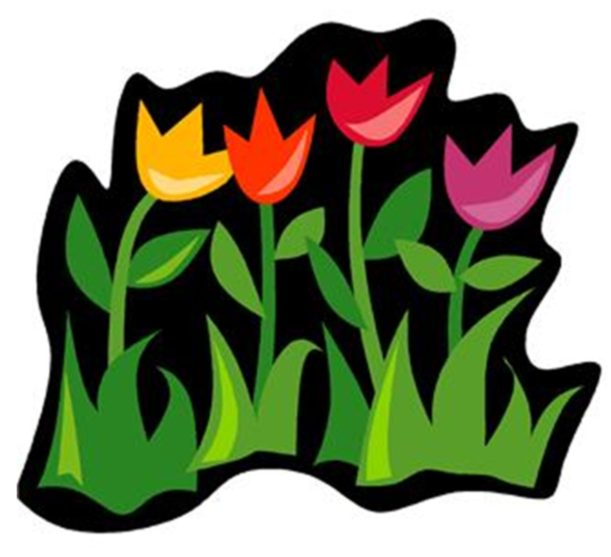 Four Tulips with Black Background