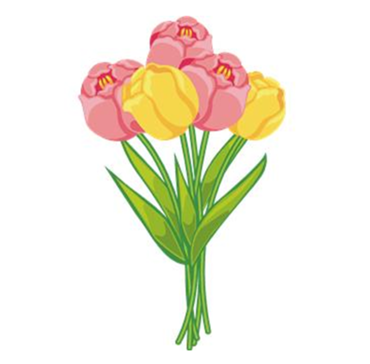Pink and Yellow Tulip ...