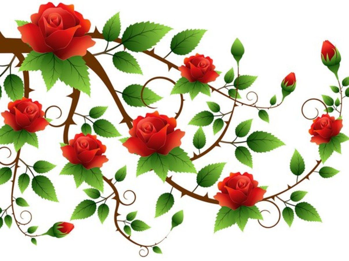 Branch of Red Roses