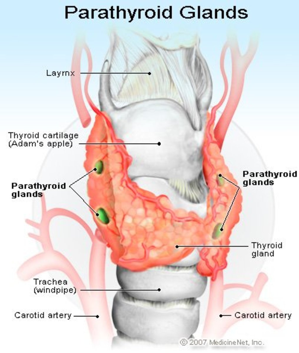 When pathological hypersecretion of PTH occurs persistently, it results in hyperparathyroidism.