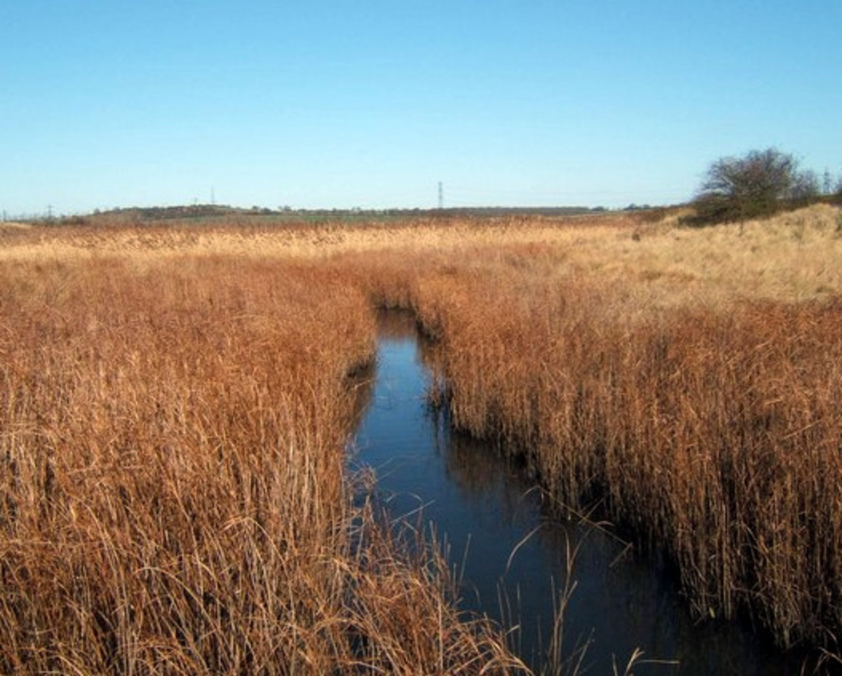 Salt marsh and Creek -  By Glyn Baker [CC-BY-SA-2.0], via Wikimedia Commons