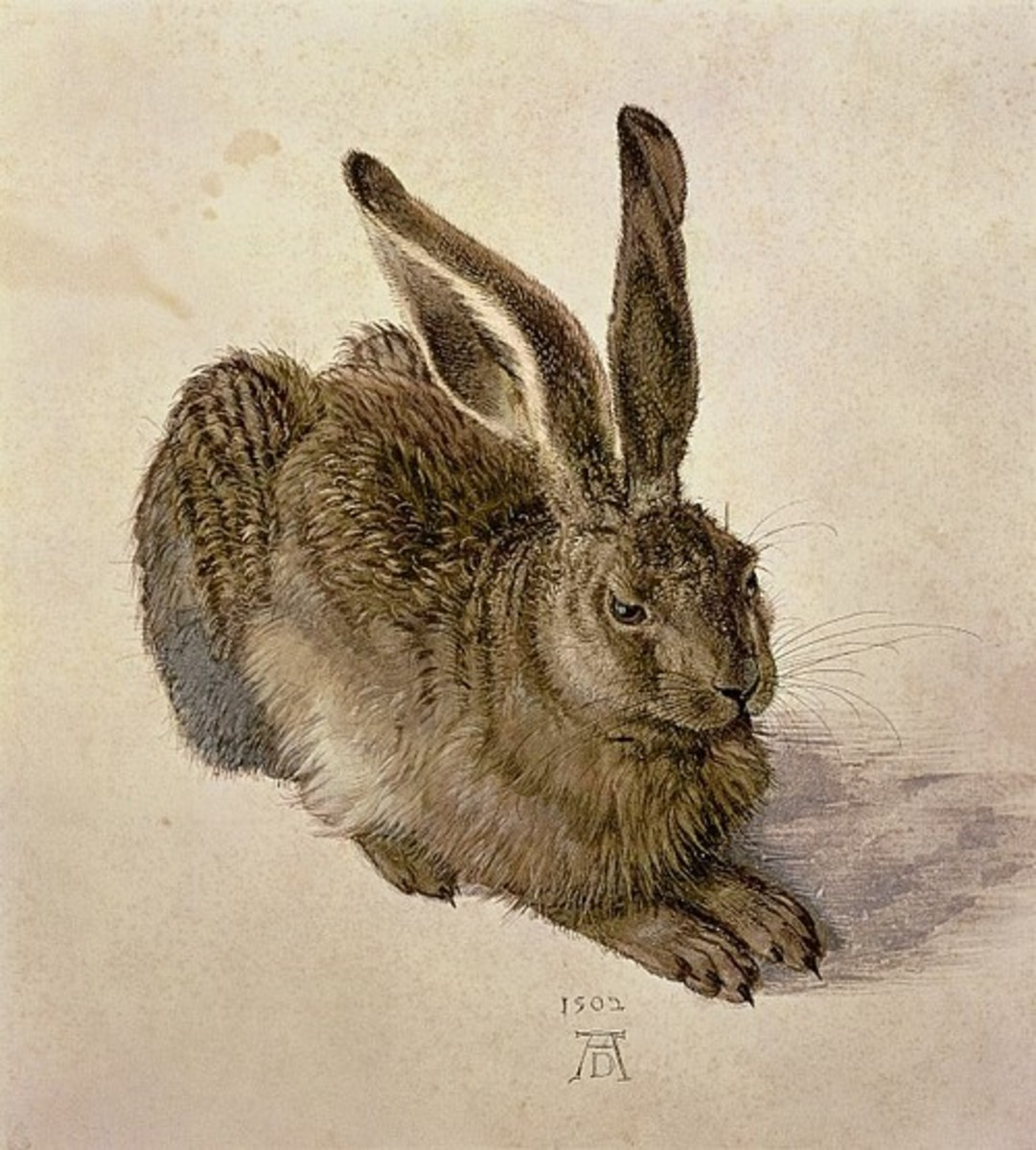 Durer's colored drawings of nature.