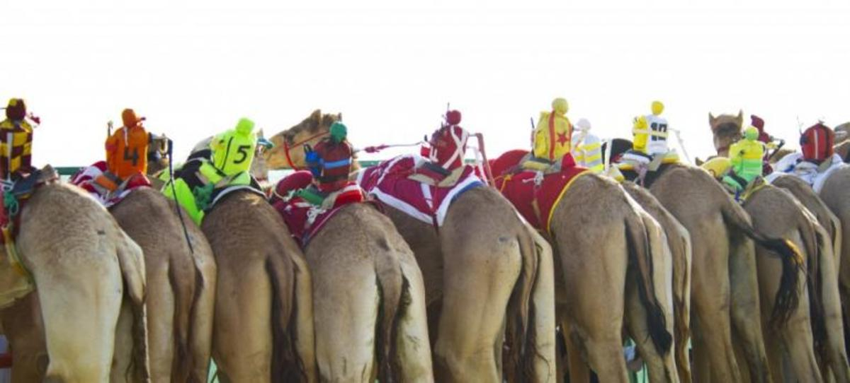 robot jockeys riding camels