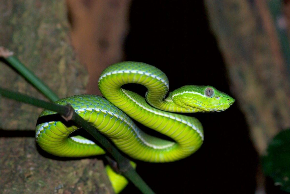 poisonous-and-venomous-spiders-snakes-and-bugs-in-peru-dangerous-animals-insects