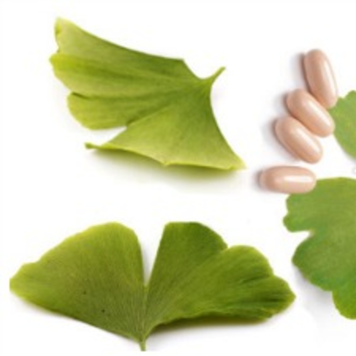 benefits-and-dangers-of-ginkgo-biloba