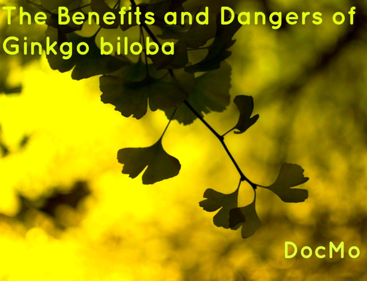 Benefits and Dangers of Ginkgo biloba