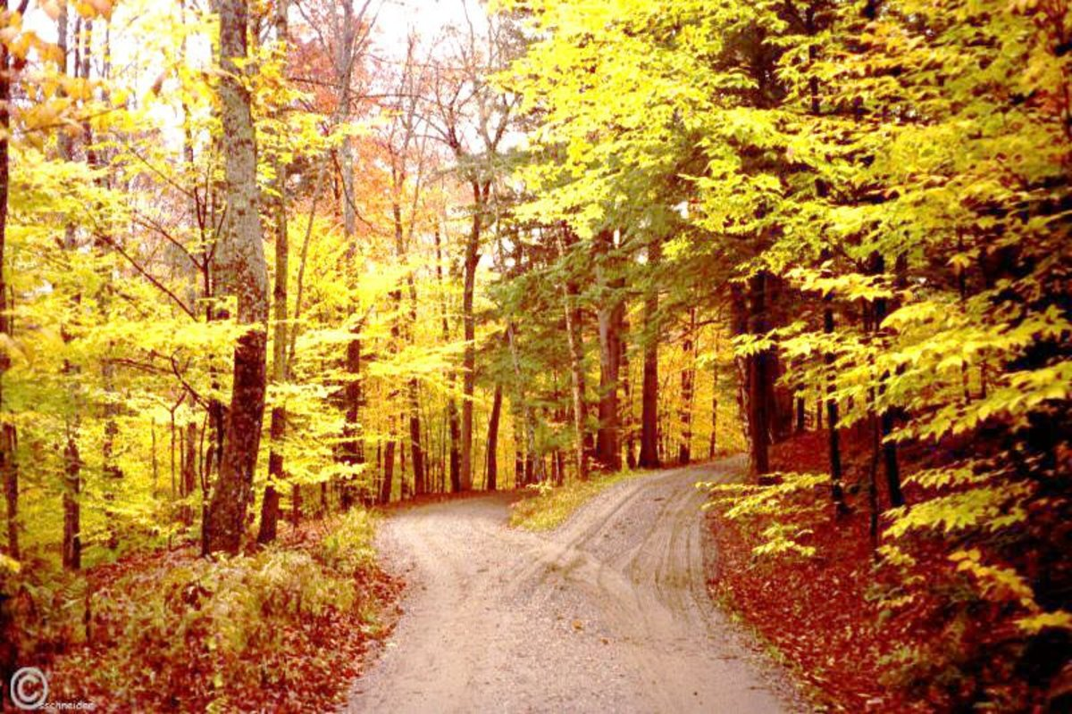 "Robert Frost's ""The Road Not Taken"": The Meaning You Never Knew Until Now"