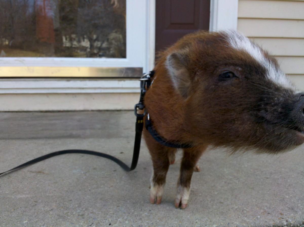 My own piggy, June.