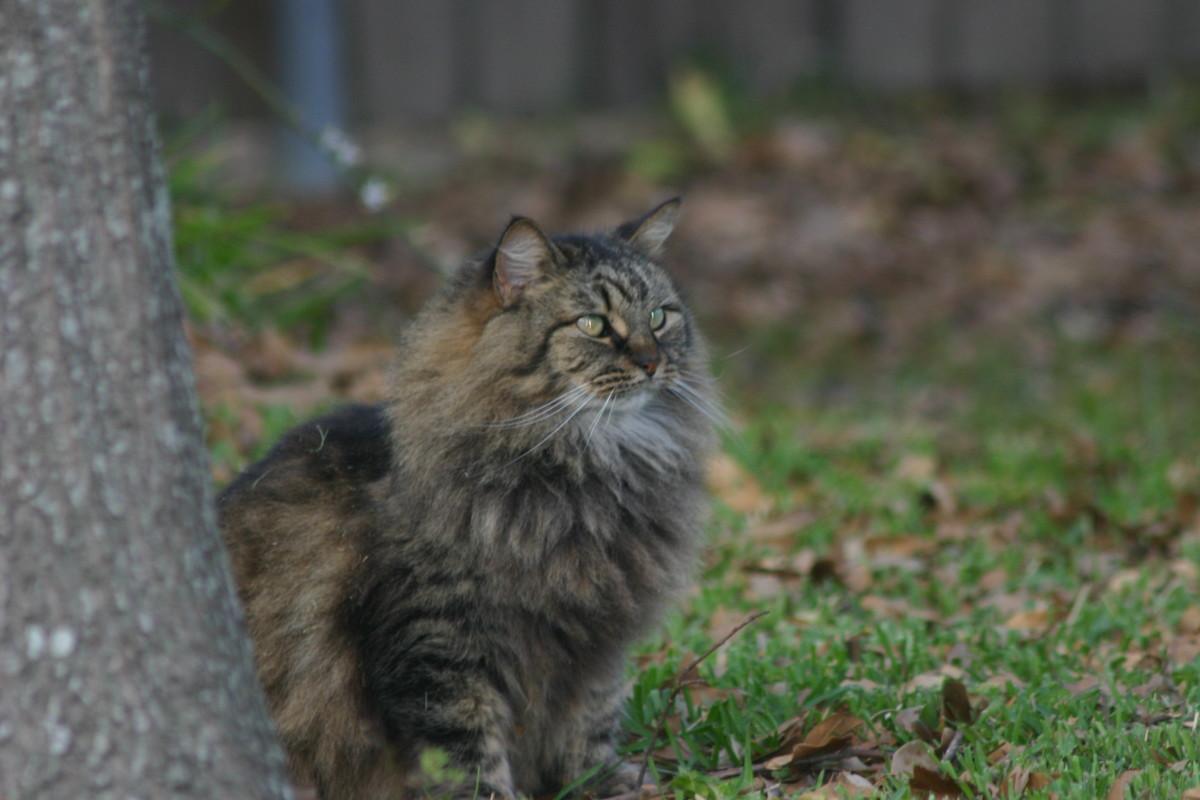 Feral Cat Frankie