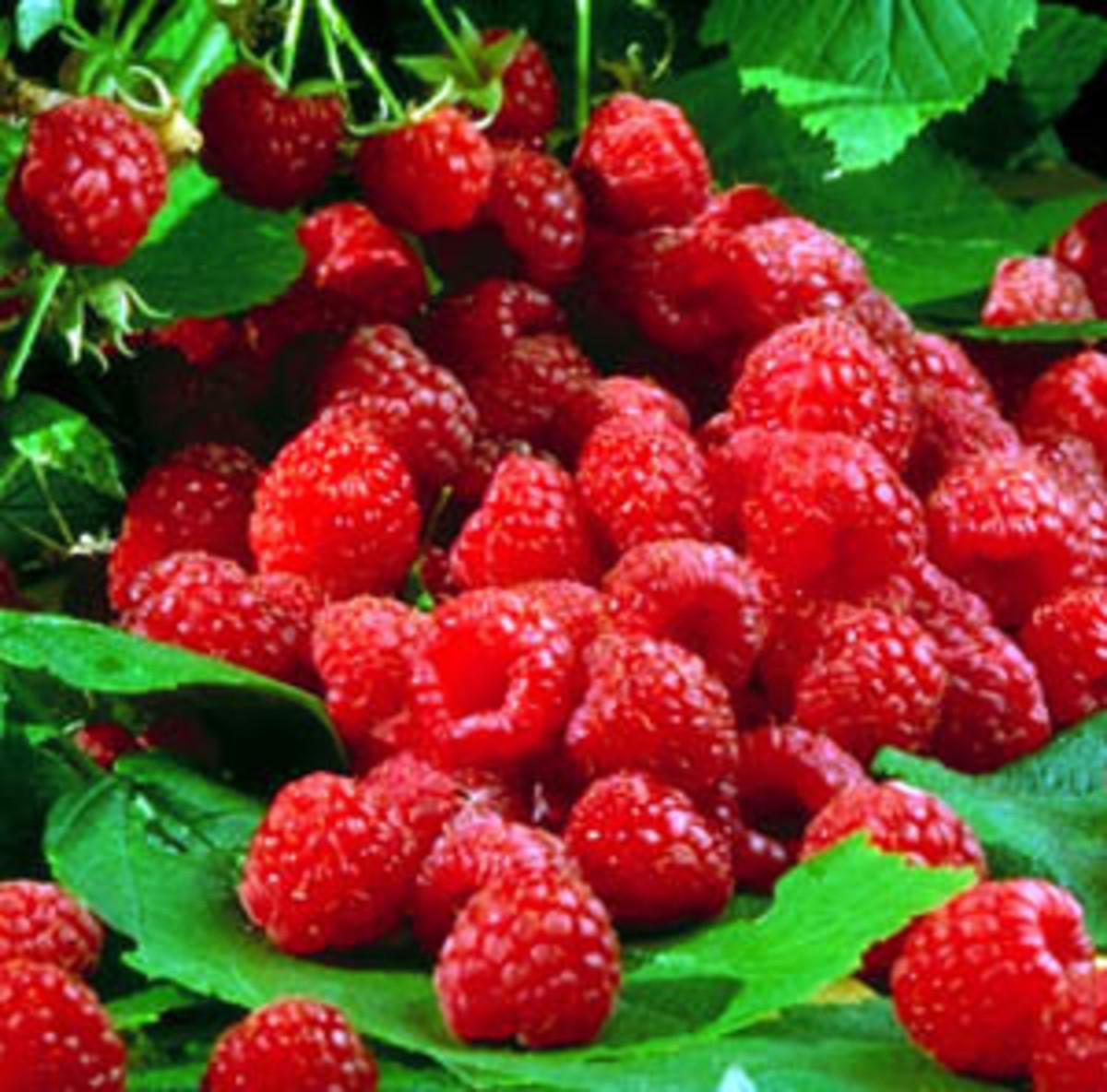 Raspberry Aggregate Fruit