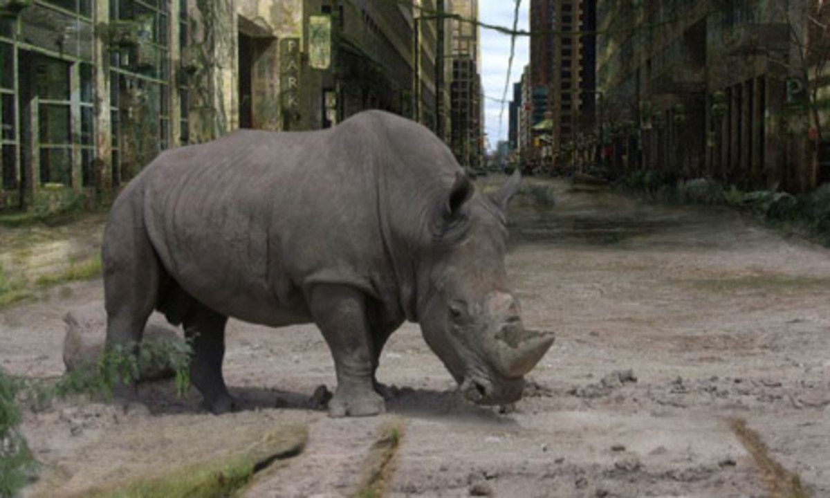 A white rhino attempting to graze in the ruins of New York City