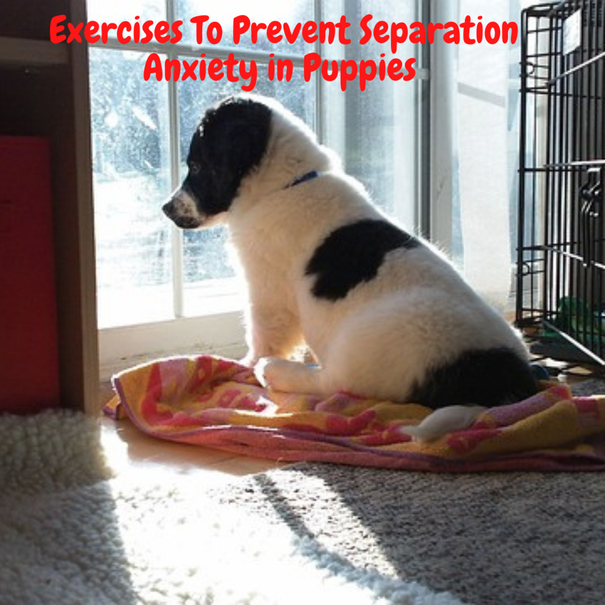 exercises-to-prevent-separation-anxiety-in-puppies