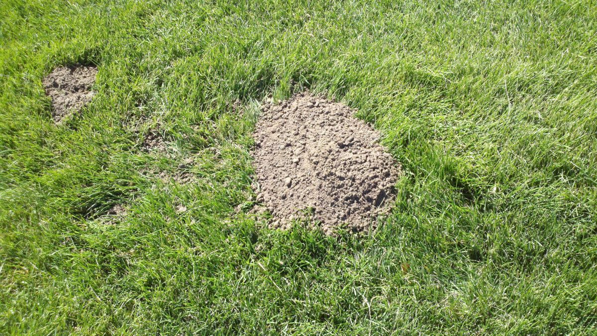 What a gopher hole will most likely look like.