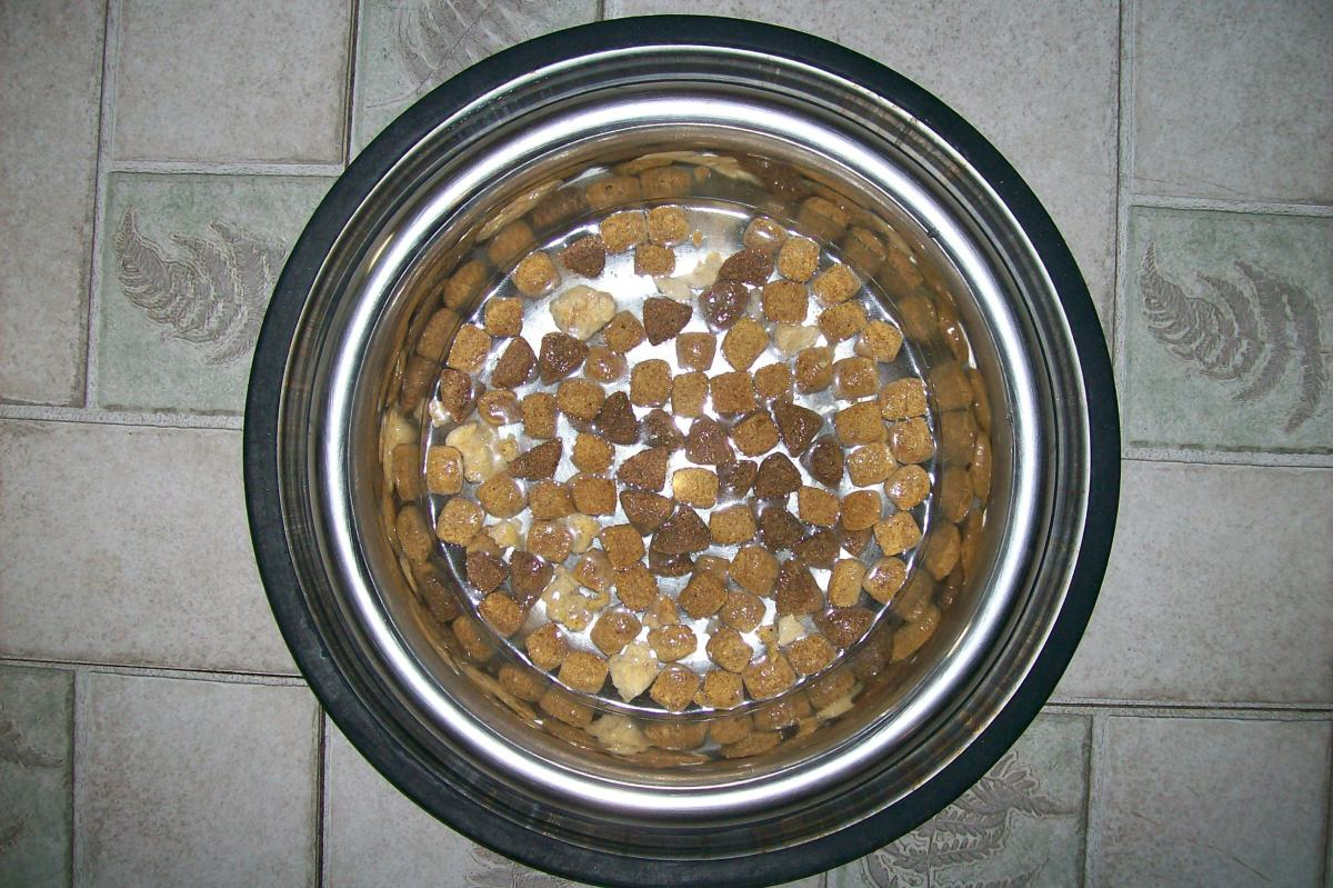 It is more difficult to eat fast when the kibble is floating in a little water.