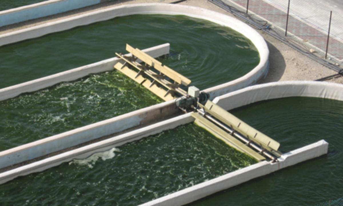 An open algae pond.