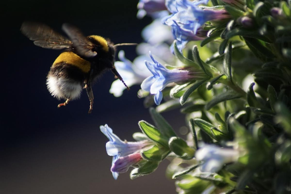 Bumblebee Vs Scientific theory. What's the distinguishing quality bumblebee has that it is ignorant of scientific theory