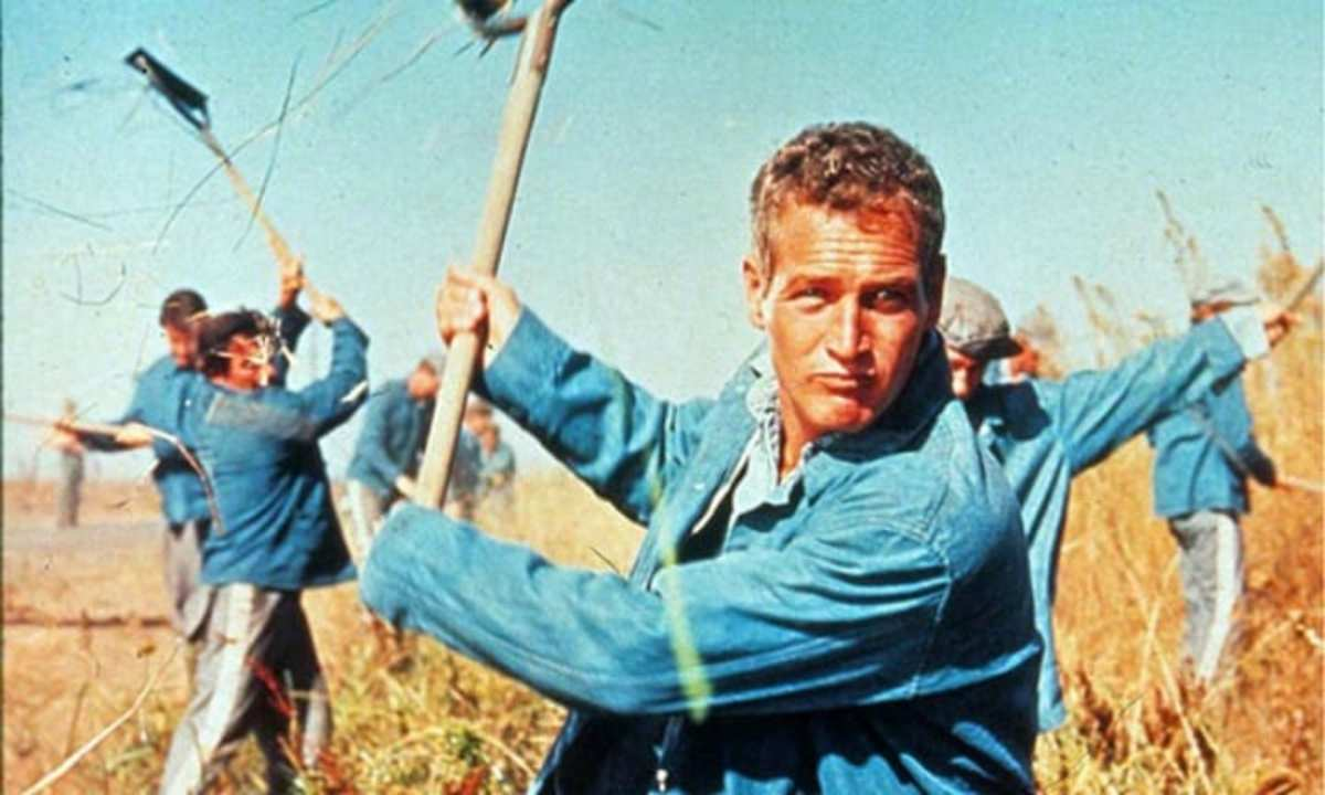 """The late Paul Newman, """"Lucas Jackson,"""" starred in """"Cool Hand Luke.'"""