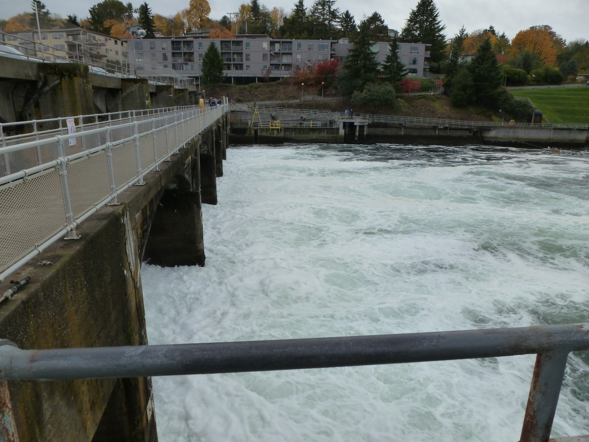The spillway at the locks regulates the water level of Lake Washington