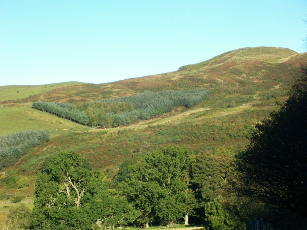 Benarty Hill, Western side with part of Benarty Wood in the foreground