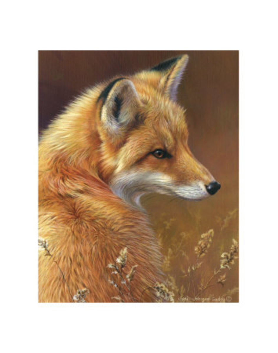 Curious Red Fox by by Joni Johnson-godsy