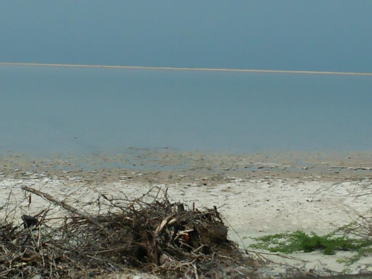 A closeup shot of Beach