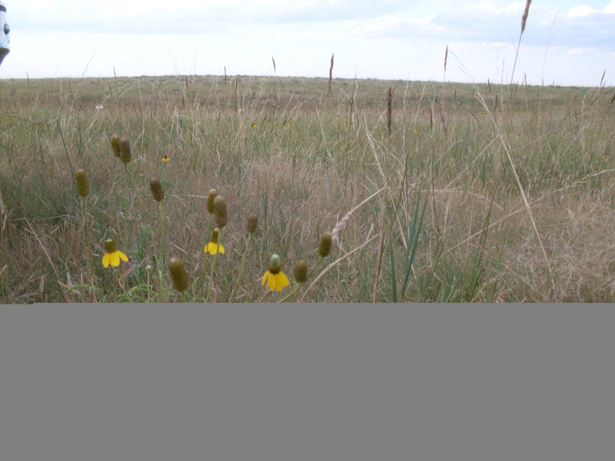 Many kinds of wild flowers grow in the pasture near the Buffalo Wallow.