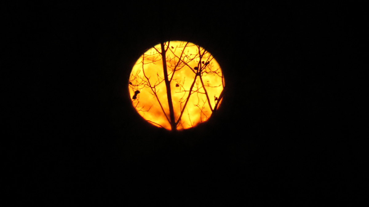 Halloween's Indigo Moon