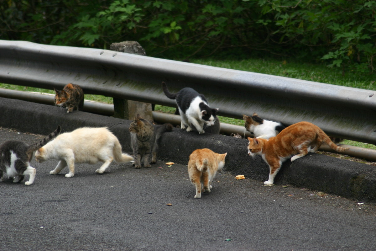 Cats come in many color schemes, as shown by this group of feral cats.