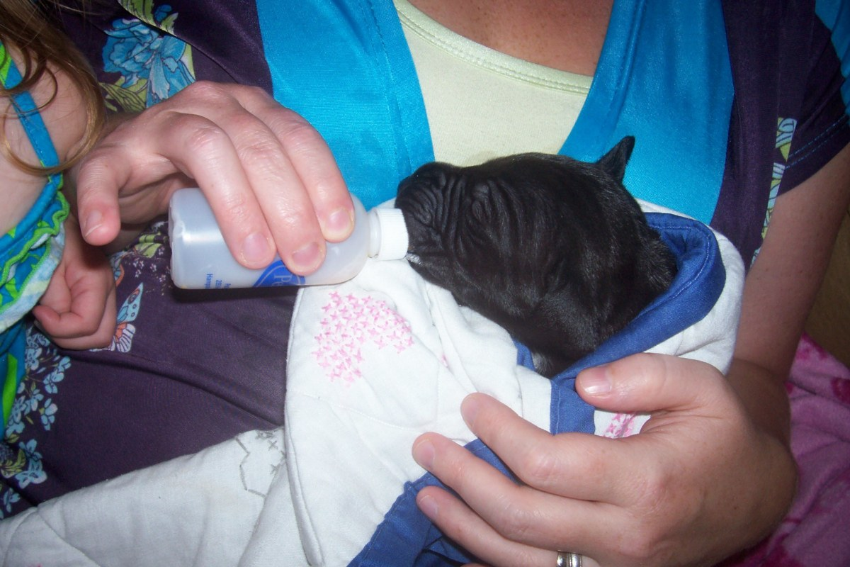 Bottle feeding puppies has to be done carefully.