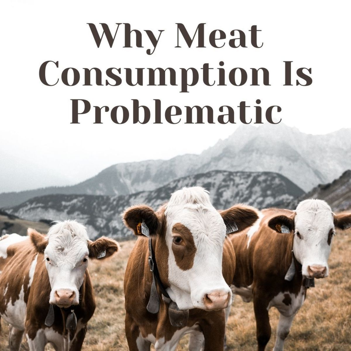 Is Meat Consumption Unethical?
