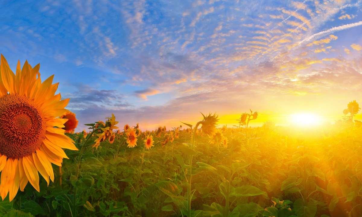 Love Is Gracefully Awakening My Glorious Dawn, to My Esteemed Friend Shauna Bowling