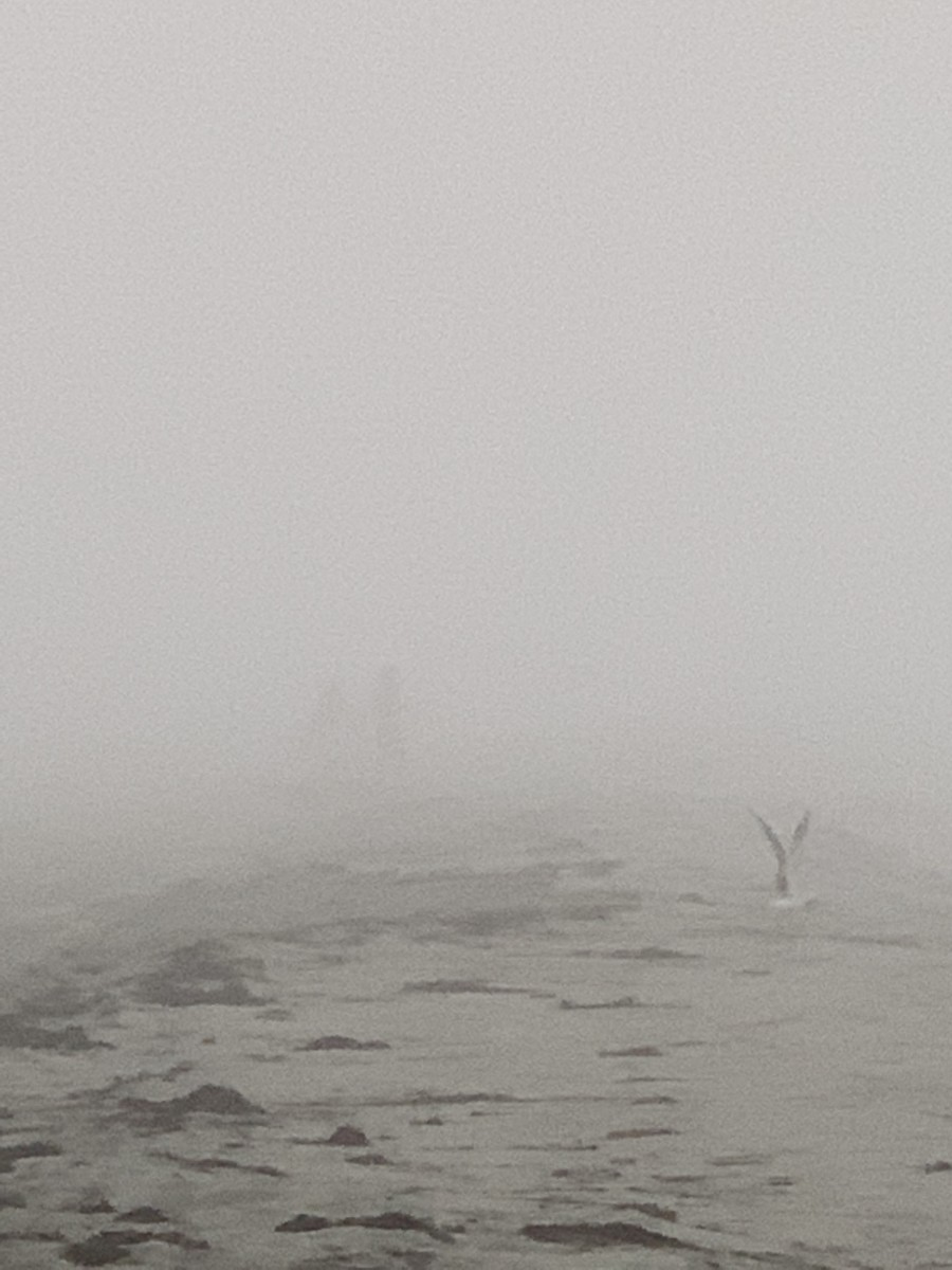 The Roaring Fog, A Poem