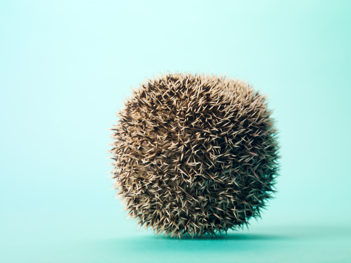 Prickly ball of fun!